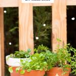 Decorar maceteros para plantas aromáticas