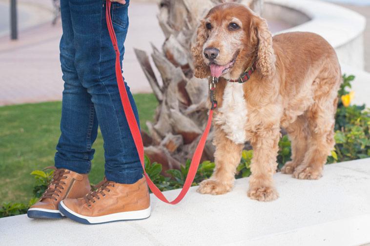 calzado-garvalin-para-el-invierno-botines-marrones